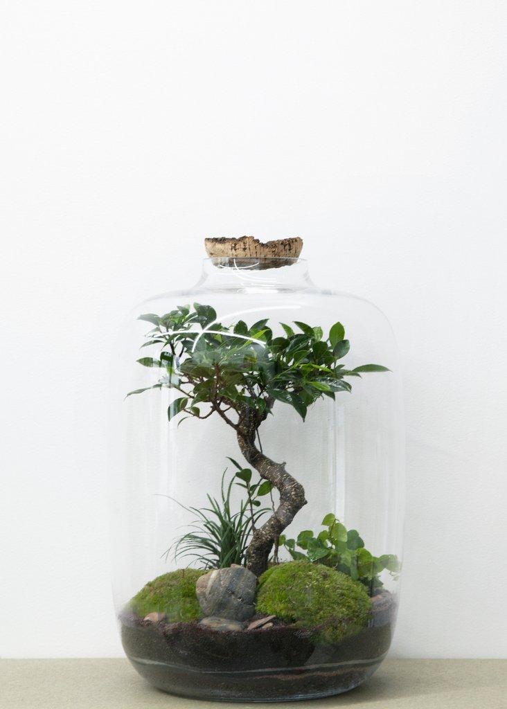 terrarium green factory moyen