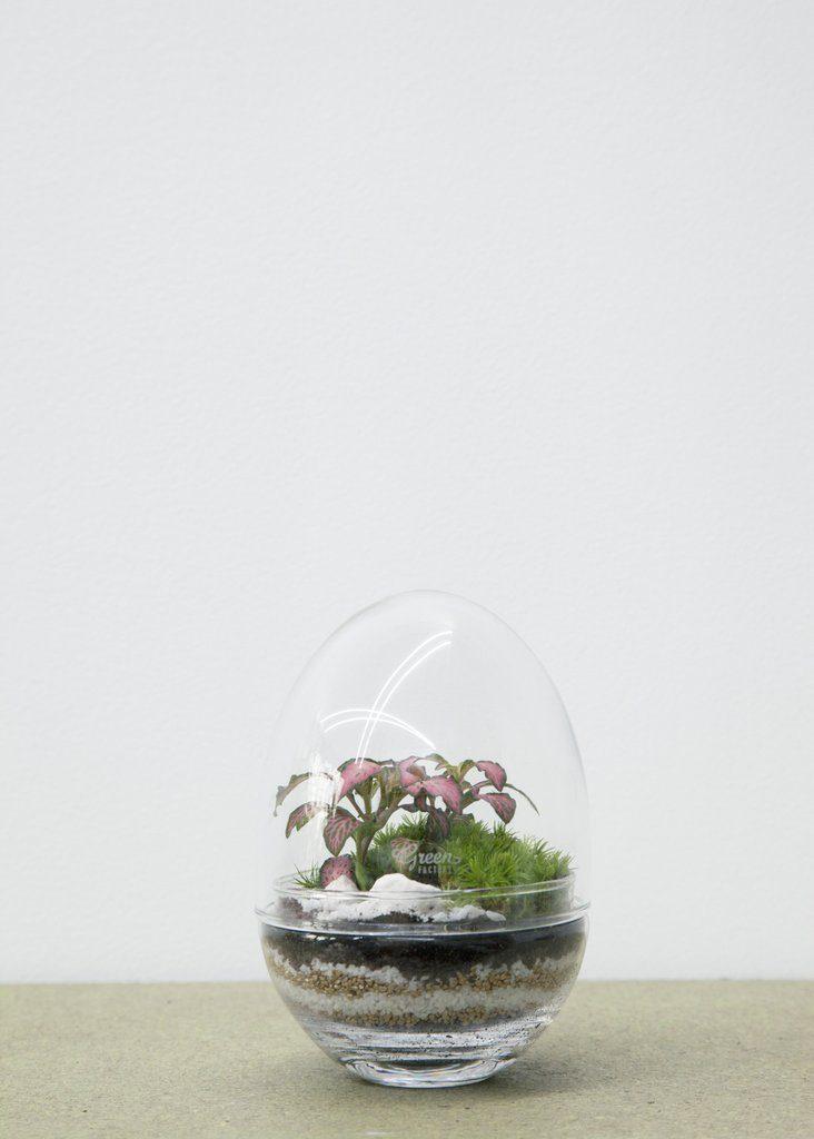 Pequenos jardins de plantas raras em casa