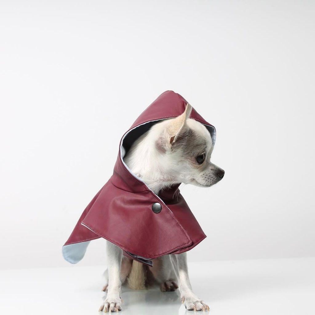 Capa para a chuva para cães