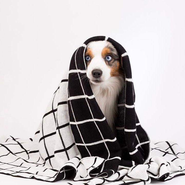 Manta para cães