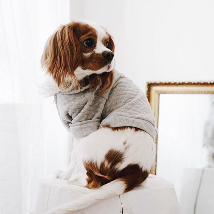 Peças de roupa para cães