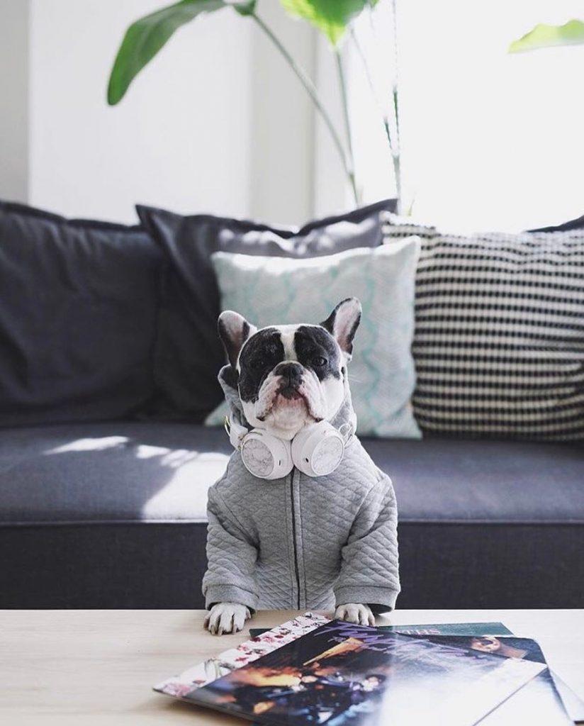 Um cão cool
