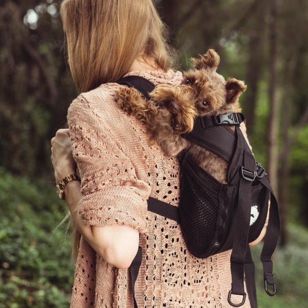 Mochila para transportar os cães nas costas
