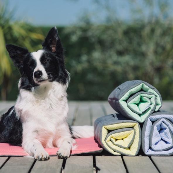 Artigos de viagem para cães