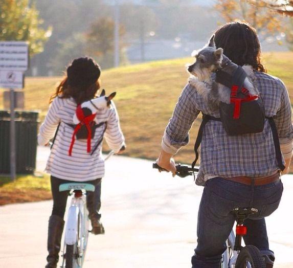 Transportar cães na bicicleta